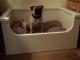 hondenmand van steigerhout met ral9010 afwerking